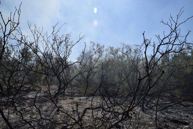 La situación de los incendios forestales en tres provincias argentinas mejoró considerablemente.