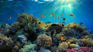 El arrecife está ubicado en la isla de Ishigaki.