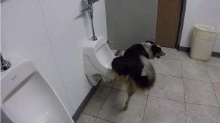 Jumpy hace sus necesidades como el más correcto de los humanos.