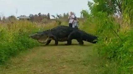 El gigantesco cocodrilo pasa delante de la gente sin inmutarse.