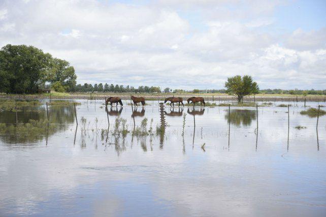 Desolación. Las zonas productivas de la región sufrieron cuantiosas pérdidas por las intensas lluvias.