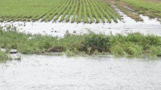 piscina. Un campo sojero absorbe entre 9 y 18 mm de lluvia por hora. En zona de parques la cifra es de 70 mm.