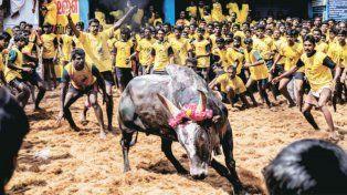 Protesta en India por un festival taurino