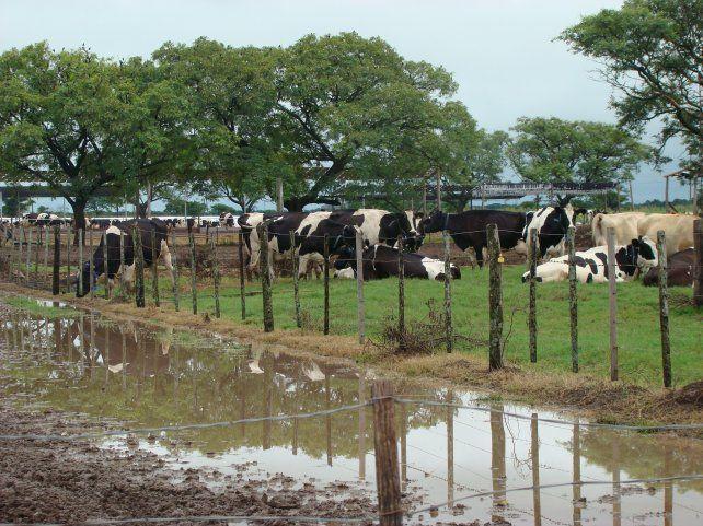 El sector lechero está perdiendo 1
