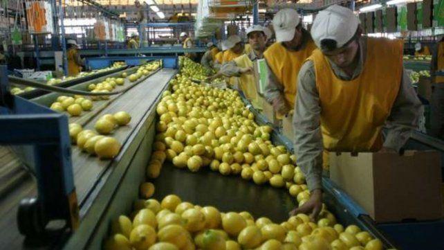 Estados Unidos suspendió la importación de limones desde Argentina