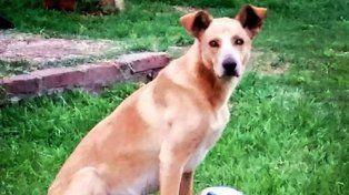 Simón recibió un balazo porque se acercó a una casa donde había una perra en celo.
