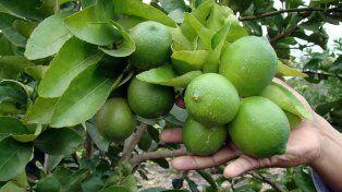 Las heladas afectaron la producción. Las frutas no maduraron lo suficiente y hoy hay escasez.