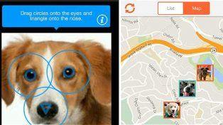 Finding Rover ayudó a miles de dueños de perros a recuperar a sus mascotas perdidas.