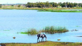 riesgo ambiental. La investigación alcanzó al río Paraná y sus afluentes.