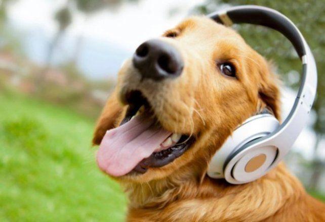 Investigadores descubrieron que la música favorita de los perros es el reggae y el rock
