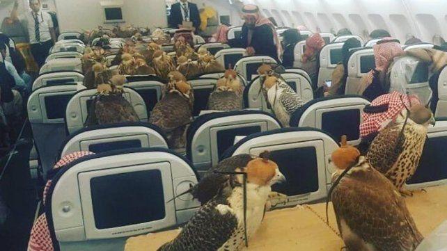 Las aves viajaron con los ojos tapados y se posaron sobre tablas colocadas arriba de los asientos.