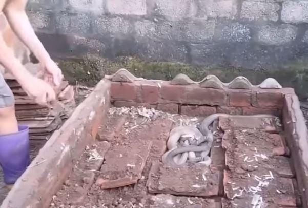 Un hombre levanta ladrillos del patio de su casa y se encuentra con un nido de serpientes