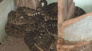 Un niño fue al baño y se encontró una serpiente de cascabel en el inodoro