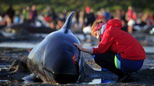 Los cetáceos quedaron varados en Nueva Zelanda.