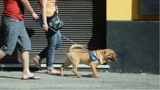 La vida de perros no es mala vida