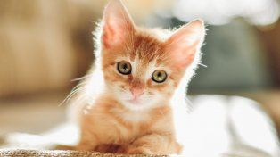 Los gatos se han convertido en los reyes de los videos en la web.