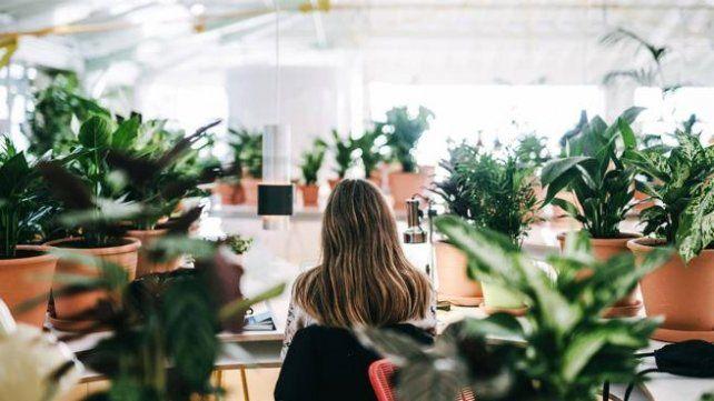 Una oficina con más plantas que computadoras para crear un ambiente de trabajo relajado