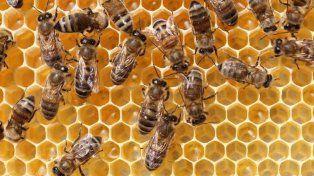 Las abejas ingresaron por una ventana de la casa de la pareja de ancianos.