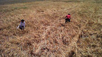 funcionarios, expertos y productores debaten sobre los usos del suelo