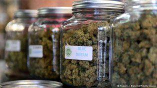 Importada. Alemania compró 170 kilos de cannabis el año pasado.