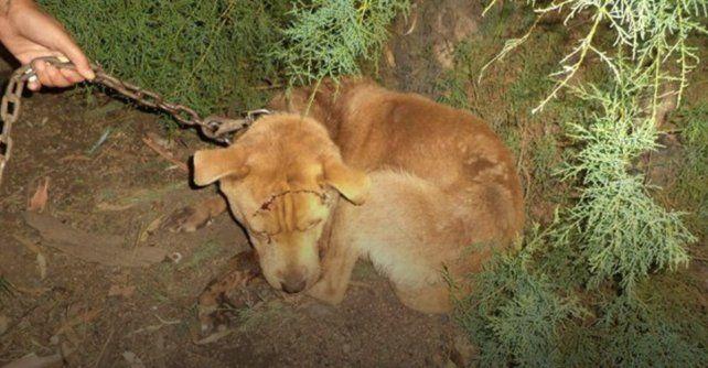 Un hombre mató a hachazos a un perro y lastimó gravemente a otros dos