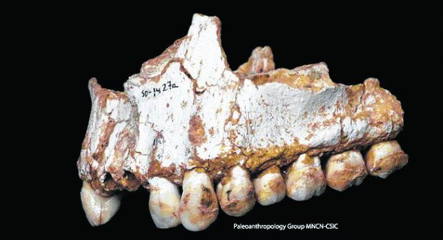 Revelador. Los neandertales tenían dietas variadas según su entorno.