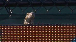 Una iguana fue la gran protagonista en un partido de tenis en el Master de Miami