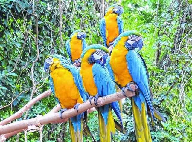 Paseo imperdible. El Parque das Aves es el de mayor tamaño de Latinoamérica