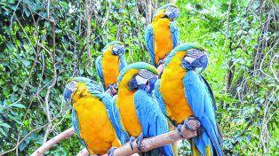 Paseo imperdible. El Parque das Aves es el de mayor tamaño de Latinoamérica, alberga a más de 1.300 animales.