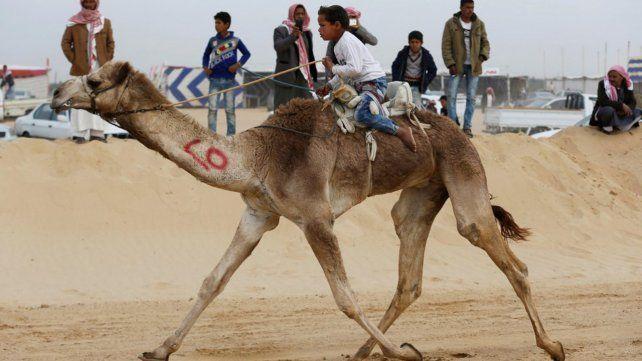 Carreras de camellos en el desierto de Egipto