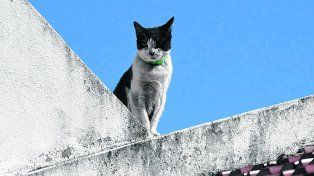 Desde lo alto. Loli, la gata que se convirtió en heroína, ayer se mostró asustada pero igual no se perdió detalle.