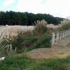 El arroyo La Totora, a cuya vera fue encontrado el cadáver mutilado de un bebé de un año y medio.