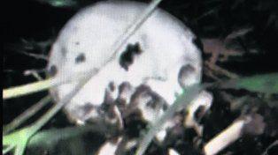 horroroso. La calavera presenta orificios que podrían ser de balas.