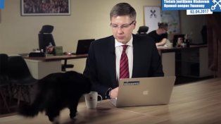 Un gato interrumpió la transmisión en vivo de un alcalde