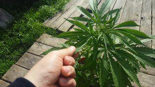 Por medio de la norma se crea el Programa Nacional para el Estudio y la Investigación del Uso Medicinal de la Planta de Cannabis