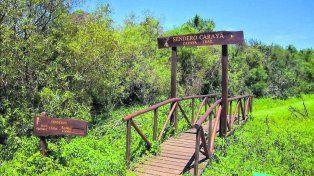 Hay monos cerca. El sendero para ver a los primates recorre unos 450 metros señalizados dentro de las 3,5 hectáreas que posee la porción de selva en galería.