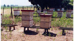 Santa Fe apuesta a liderar la producción apícola del país