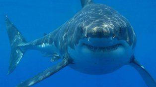 El ataque de un tiburón se produjo en una playa de Nueva Zelanda.