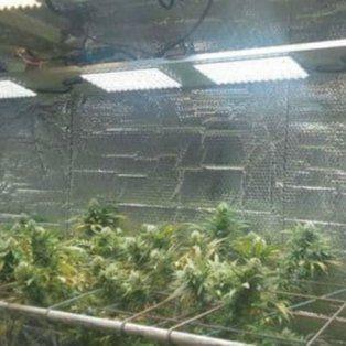 desmantelaron un invernadero de marihuana que funcionaba con equipamiento de alta tecnologia