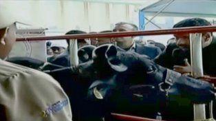 Maduro pide apoyo a un grupo vacas para su reforma política y causa polémica