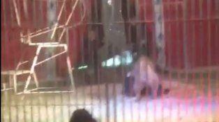 Un video muestra el feroz ataque de un león a un domador en pleno espectáculo