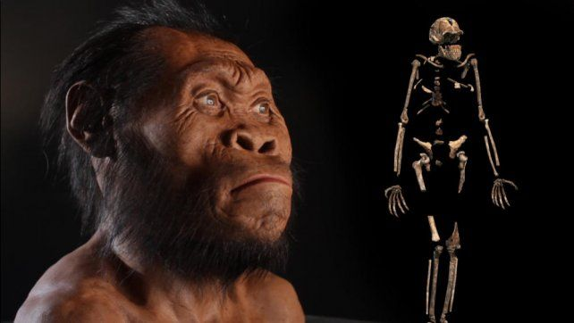 Homo naledi. Un estudio demuestra que convivió con el Homo sapiens.