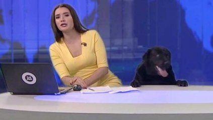Un perro interrumpió un noticiero en vivo, robó cámara y se convirtió en viral
