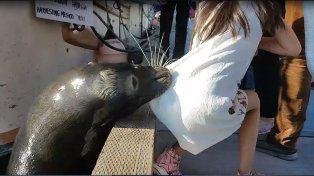 La imagen del momento en el que el lobo marino ataca a la menor.