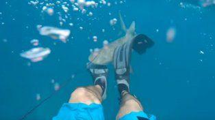 Graba el momento en que lo ataca un tiburón mientras practicaba pesca submarina