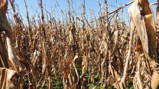 Con riegos climáticos, cada vez más intensivos, los seguros de re siembra son una alternativa para muchos productores.