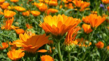 Un curso municipal sobre plantas medicinales con récord de inscriptos