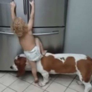 furor por el video de un bebe que trepa sobre un perro para atacar la heladera
