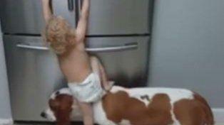 Furor por el video de un bebé que trepa sobre un perro para atacar la heladera