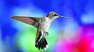 La estrategia  del colibrí (O la revolución de los pequeños)